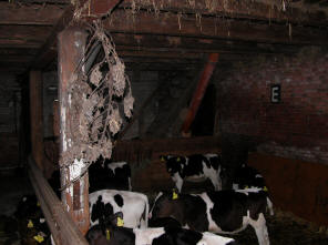 koeien onder ons