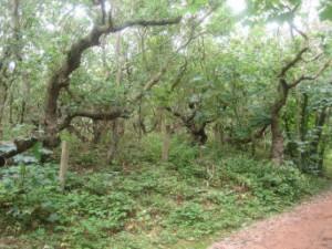 Sierlijke bomen langs bospad